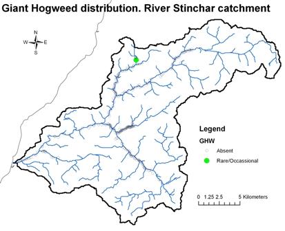 River Stinchar - Giant Hogweed