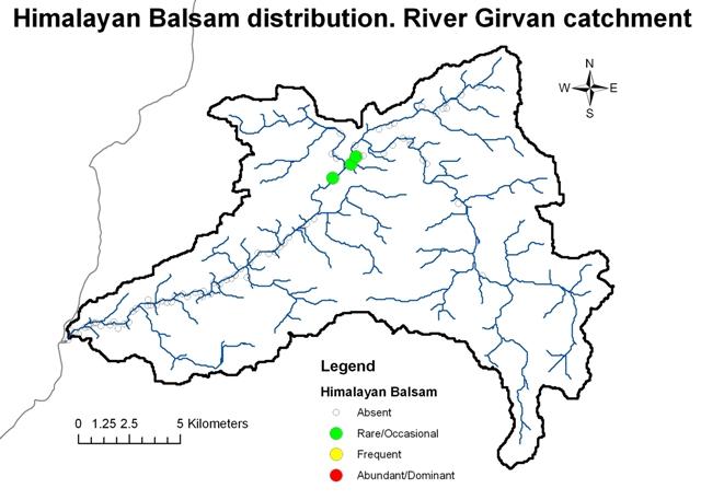 River Girvan - Himalayan Balsam