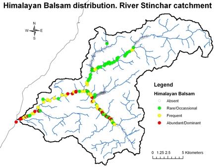 River Stinchar - Himalayan Balsam