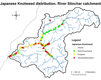 River Stinchar - Japanese Knotweed