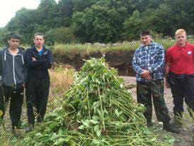 Some of the lads from Galston A.C and on of the many piles of Balsam that they pulled