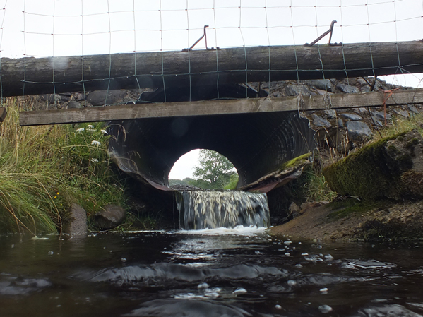 The lower end of the culvert is partially blocked by a concrete slab that may restrict the leaping ability of salmon.