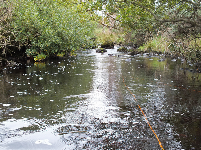 One of our sites on the Burnock where trout are plentyfull