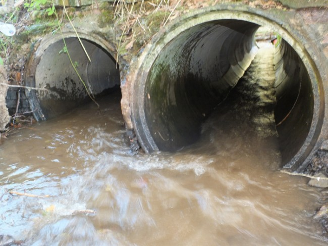 Success. Culverts cleared and ready for a salmon.