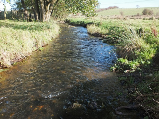 Potentially the best spawning habitat available in the Chapelton system