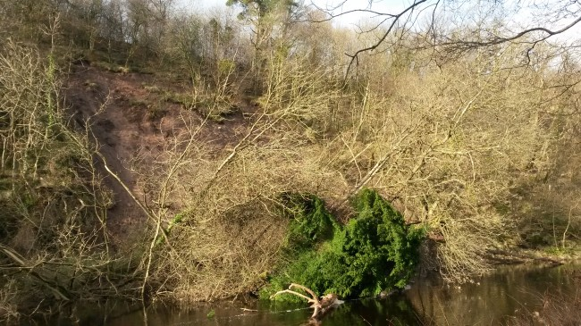Compare this with the image I took last weekend. The conifer is now in the middle of the river and tonnes of soil has slid down the banking.