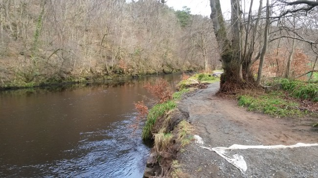 The River Ayr Way is at risk of being undermined as a result of the landslides on the far bank. This bank in now undercut and a mature tree has been lost recently as evident by the hole in the middle distance.
