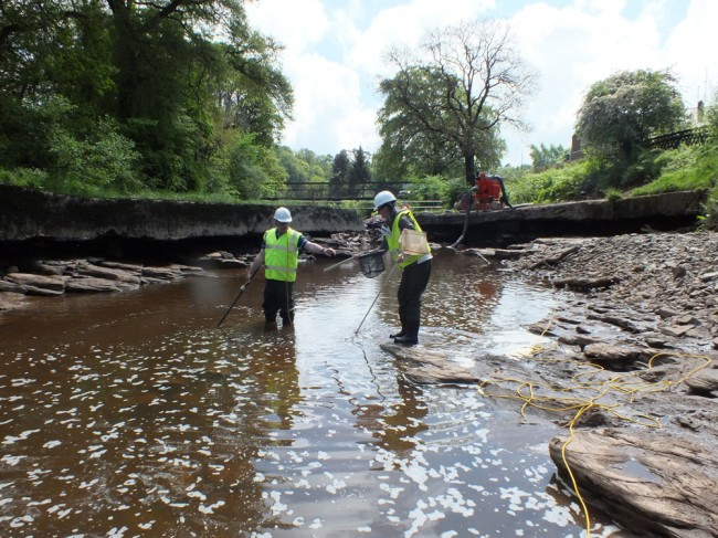 Electro-fishing the middle pool to remove as many trout, salmon eels and lamprey to safety