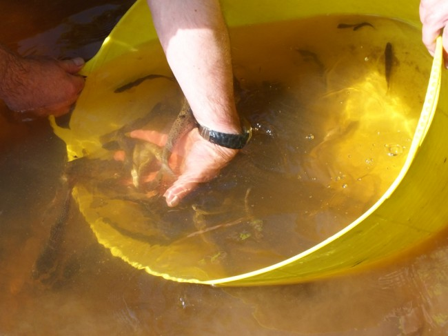 Once we completed our sampling, we quickly returned the catch to the river upstream.