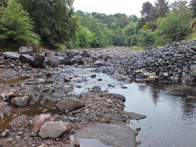 The sight of a shrunken river that greeted me this morning when I arrived at the site. With salmon migrating upstream, flow at this level meant their movements upstream were curtailed. The situation was quickly rectified.