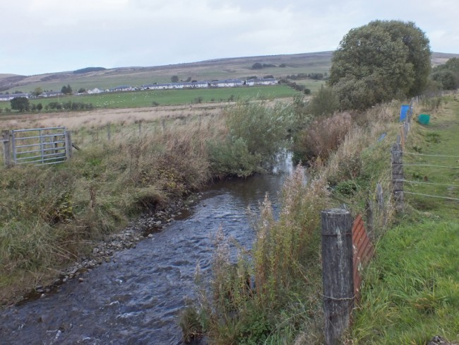 Great cover for fish has developed at the Cummock Burn following fencing in 2004. The site has deepened considerably and narrowed offering all year classes habitat and cover. The flow has narrowed at the top of the site and this results in scour and deepening.