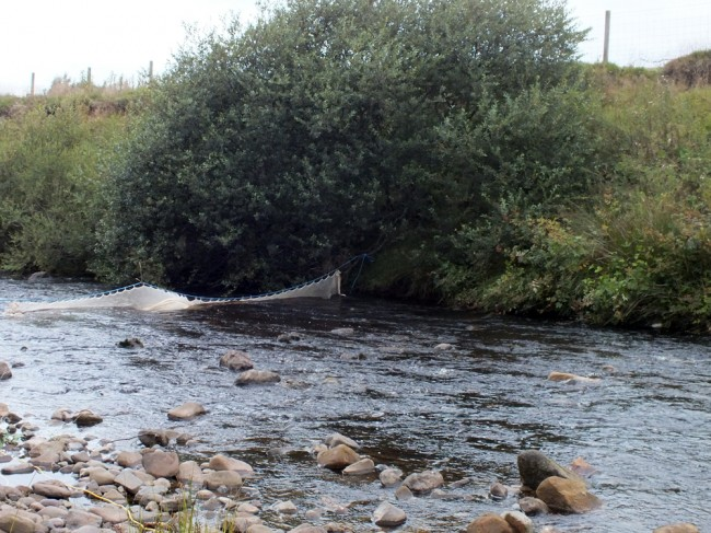 The lower end of the Glenmuir gravel extraction site. Habitat is good for both fry and parr but to ideal for trout.