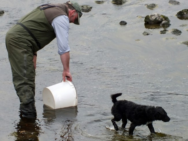 Brewster helping to scatter the fish once they were released back into the burn
