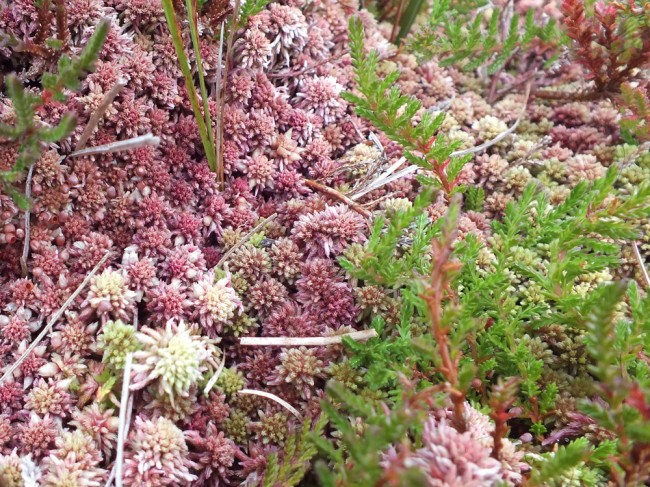 Heather and moss