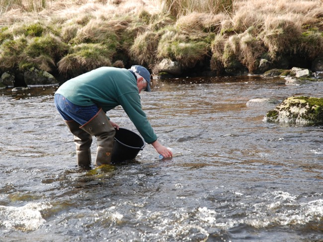 Wallace stocking a bucketful of fry into Carrick Lane earlier this year.