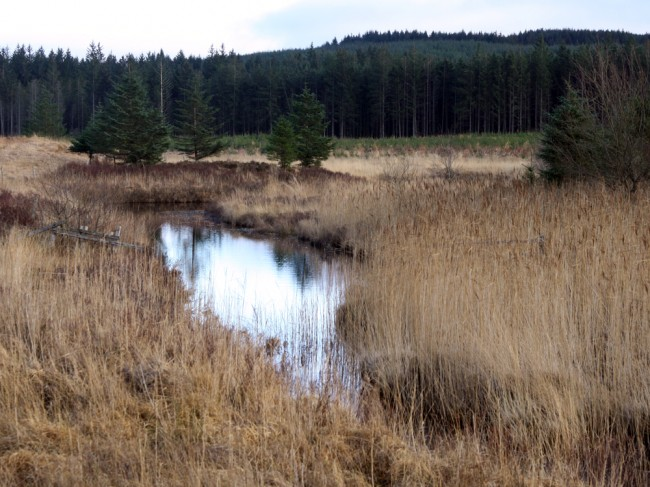 The Garple offers few real spawning opportunities but there are holding pools that may contain a few salmon