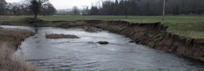 The same woven reinforcements from a different angle and the sediment building up behind can be seen. This may benefit from an extension and some further woven reinforcements at a higher level to create a steeped bank which should be more resistant to erosion.