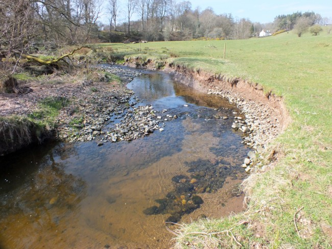An area of rapid erosion that leads to silt downstream. Fencing alone wouldn't solve this and we hope to use a combination of green and tradition engineering and  fencing to improve this situation.