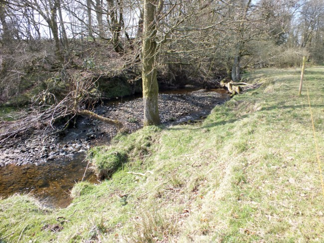 Gravel deposits are building up in low energy areas and this leads to accelerated erosion as flows are deflected against the river bank rather than down the existing channel. Fencing should help to address this issue but on its own may not be enough