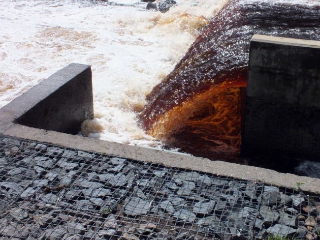 The entrance to the fish pass was inaccessible again today in the spate. This situation has been well documented in the past and details can be found in earlier posts on this blog.