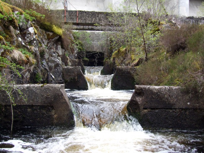 The fish pass at Loch Doon Dam appears to be well designed and constructed and leads us to believe that the problem lies with the entrance doors at the loch.