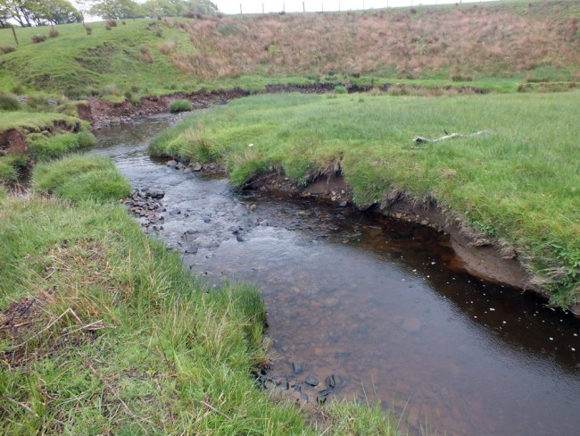 Only 50m downstream of the last photo of the woodland and the habitat quality is much reduced. Fencing and hardwood tree planting could easily improve productivity in this burn.