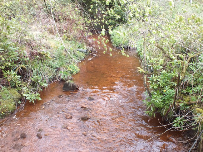 The Stottencleugh Burn looking typically sunfish friendly.