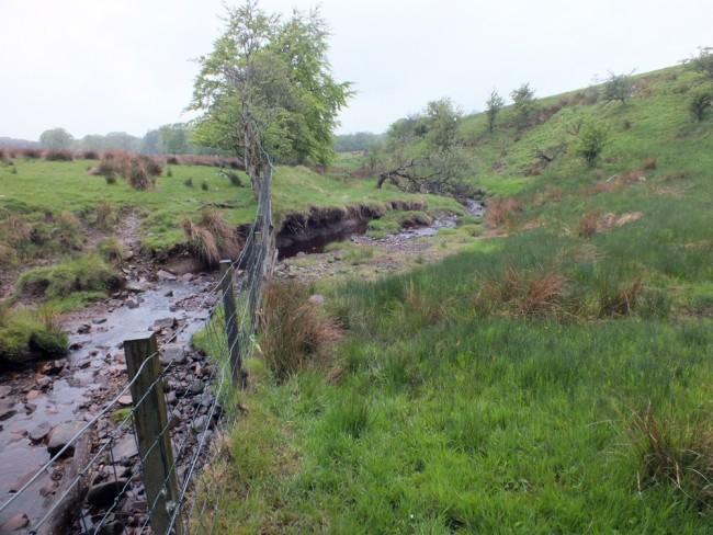 Stock driven erosion on the Blairkibboch Burn