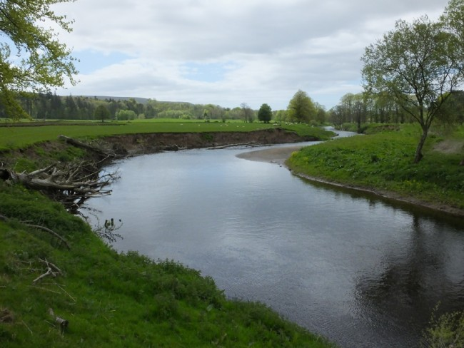 Full trees were used in an attempt to deflect flows and allow the bank to stabilise. A small a amount of reproofing appears to have been undertaken.