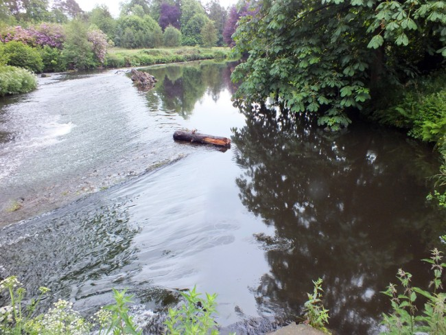 The full width of the river was covered with an film of diesel at Aucendrane Weir when i visited today.