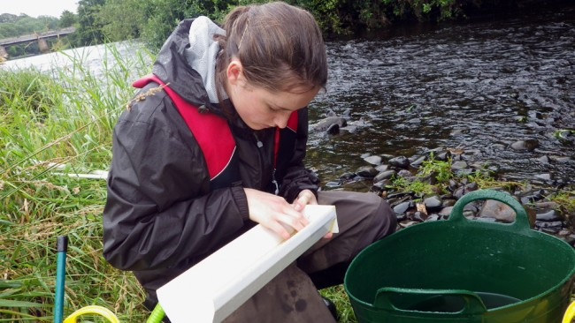 Katie measuring fry caught in the side channel downstream of Tarholm Bridge.