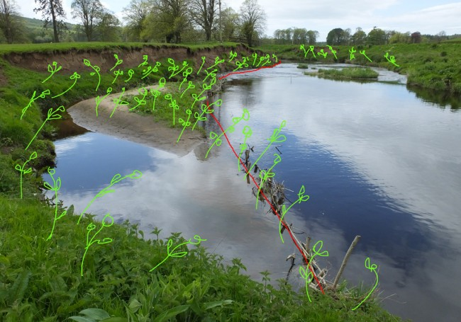 We hope to complete the spilling and plant willow cuttings to help stabilise the erosion