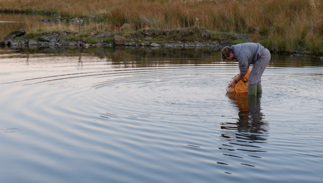 Releasing trout as the sun sets at end of a long but satisfying day.