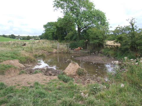 The site on the purclewan Burn prior to fencing. Apart from the silt, enrichment, and bacteria that arose from cattle access, the burn was over wide, shallow and offered no fish cover in this area. Tonnes of soil hade been lost over the years into the  burn.
