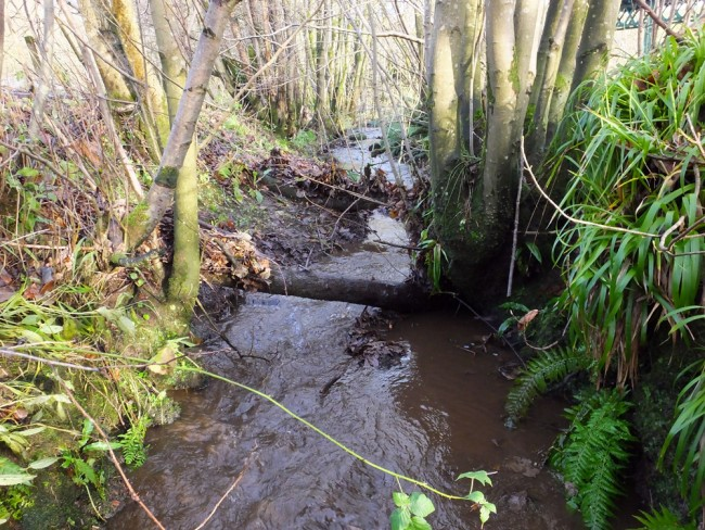 % minutes after Muir and I set about clearing the blockages, fish will now be able to spawn in the lower reaches f this burn in the next few weeks.