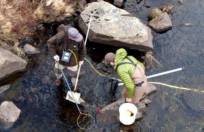 Electro fishing on the Garple. A salmon pre smolt can be seen at the arrow head but I don't think Struan (holding the bucket) had seen it at this point. Muir is on the anode.