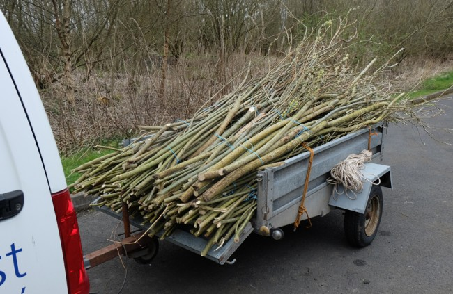 Gathering enough willow is the hardest part of this work.