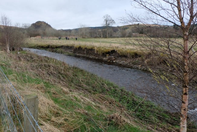 Erosion occurring in an artificially straightened stretch of the Cummock Burn