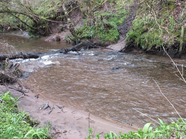 April 2015 just 10 minutes after Muir and I cleared a log jam and the sediment was beginning to move downstream. Two or three days later it was much improved but there was still a fair bit of fine sediment on the bed. Compare this with the next image that I took today.
