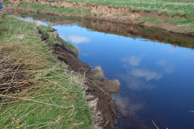 The first area where we started off this morning. The near bank was eroding rapidly (due to grazing pressures and previous straightening). Tonnes of nutrient rich soil have already been lost to the river and more was likely. This contributes to diffuse pollution and reduces water quality, invertebrate diversity and fish spawning success and densities.