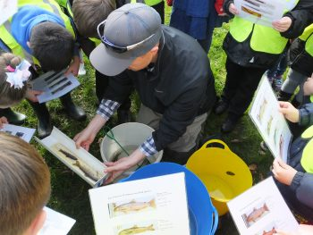 Fish identification with Greenmill Primary on the Lugar Water